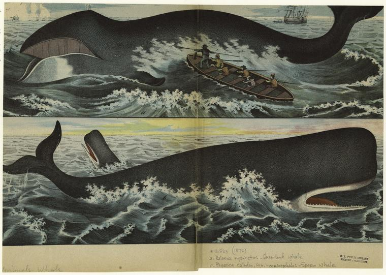 whaling-shipwreck-sperm-whalestures-jamie-colby-nackt